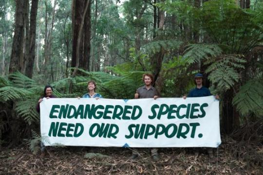 Conservationists protest the destruction of endangered species habitat in Toolangi